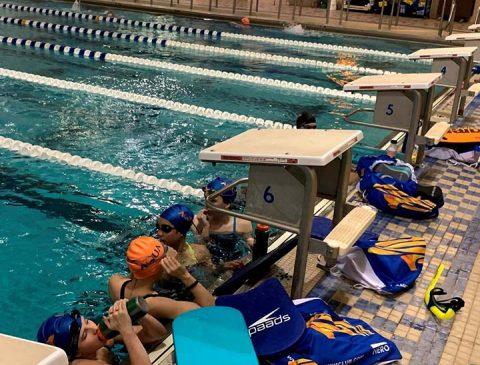 brandon aquatics aqua swim michigan five